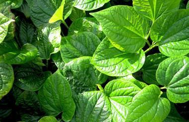 Hình ảnh Bệnh xương khớp và thảo dược trong vườn
