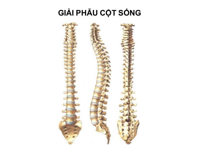 thoai-hoa-cot-song-lung